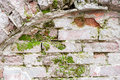 Brick wall with arc and moss green Royalty Free Stock Images
