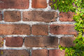 Brick wall and clinging vine a texture shot of an old in the historical district of charleston south carolina with a green Stock Images