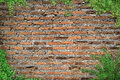 Brick wall with copy space framed by Ivy Royalty Free Stock Photo