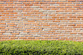 Brick wall and hedge background with old green Royalty Free Stock Photo