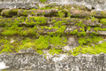 Brick wall and moss. Stock Image