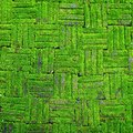 Brick wall texture of old stone wall covered green moss Royalty Free Stock Photo