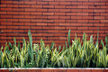 Brick wall with ornamental plants Stock Photography