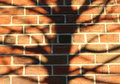 Brick wall tree silhouette texture background Royalty Free Stock Photos