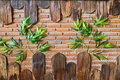 Brick wall with wooden frame and green plant Royalty Free Stock Images