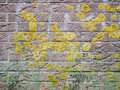 Brickwall with lichen format filling old brick wall and moss Royalty Free Stock Photos
