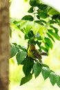 Brid closeup yellow bird on a branch Stock Images