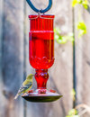 Brid on feeder yellow black bird hummingbird Stock Image