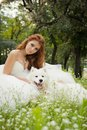 Bride with dog young beautiful samoyed Royalty Free Stock Images