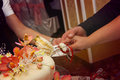 Bride and groom cut a wedding cake hands of of slice of Royalty Free Stock Image