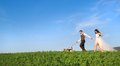 Bride and groom with dog walk their beagle in the green field Royalty Free Stock Photo