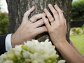 Bride and groom hands resting on a tree trunk Stock Image