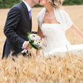 Bride and groom kiss themselves in a grain field Royalty Free Stock Photos