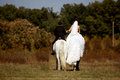 Bride and groom riding horses on their wedding day Stock Photo