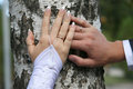 Bride and groom show their hands wearing wedding rings Royalty Free Stock Photo