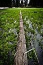 Bridge across crecent meadow, Sequoia National Park Royalty Free Stock Photo