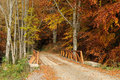 Bridge in autumn forest and road landscape Stock Images