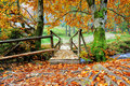 Bridge in the autumn forest wooden Stock Images