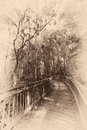Bridge in a forest wooden kirby storter roadside park ochopee collier county florida usa Royalty Free Stock Images