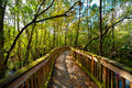 Bridge in a forest wooden kirby storter roadside park ochopee collier county florida usa Royalty Free Stock Image