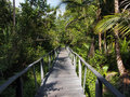 Bridge in the jungle Royalty Free Stock Image