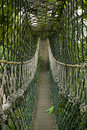 Bridge in the jungle Royalty Free Stock Photo