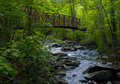 Bridge in a Lush Forest Stock Photography