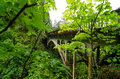 Bridge and lush vegetation on historic highway running through the columbia river gorge a green forest Stock Photo