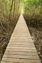 Bridge  into mangrove 1. Stock Photos