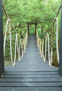 Bridge in mangrove conservation center Royalty Free Stock Image
