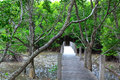 Bridge on Mangrove forest Royalty Free Stock Images
