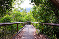 Bridge through the mangrove reforestation concrete Stock Photos