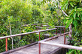 Bridge through the mangrove reforestation concrete Royalty Free Stock Photography