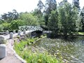 Bridge over the pond  with iris flowers, pines  in  park in  Kotka, Finland Royalty Free Stock Photo