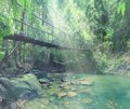 bridge over a river in the jungle Royalty Free Stock Photo