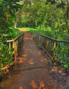 Bridge in the rainforest Royalty Free Stock Photo