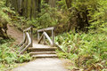 Bridge in the Redwoods Royalty Free Stock Photography