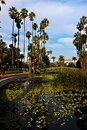 Bridge to an island on the lake at Echo Park in Los Angeles, California. Royalty Free Stock Photo