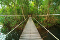 Bridge to the jungle,Khao Yai,Thailand Stock Image