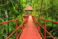 Bridge to the jungle trang thailand southern of Royalty Free Stock Photo