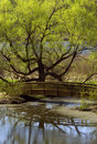 Bridge and Tree Reflection Royalty Free Stock Photos