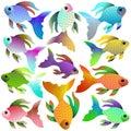 Bright aquarium fish of different colors and shades