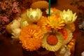 Bright Australian Native Flowers Royalty Free Stock Photo