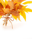 Bright autumn leaves bouquet in jar Stock Photos
