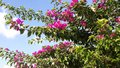 Bright beautiful floral tree Royalty Free Stock Photo