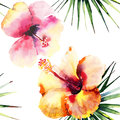 Bright beautiful tender sophisticated lovely tropical hawaii floral summer pattern of a tropic light pink and yellow hibiscus and Royalty Free Stock Photo