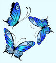 Bright butterfly Stock Images