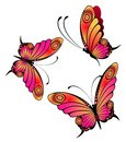 Bright butterfly Stock Photos