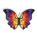 Bright butterfly Royalty Free Stock Photo