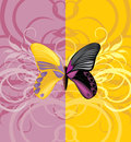 Bright butterfly on the ornamental background illustration Stock Photography
